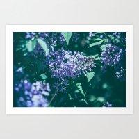 Wild Lilac Art Print