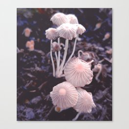 Fungus Blush Canvas Print