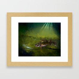 Walleye, the Chase (walleye fishing art) Framed Art Print