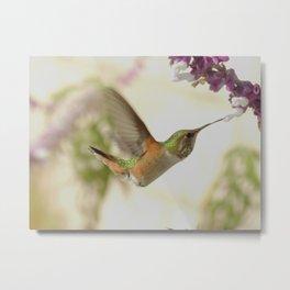 Ms. Hummingbird Checks Another Nectar Source Metal Print
