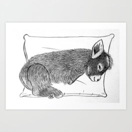 Baby donkey sleeping Art Print