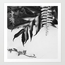 black and white foliage Art Print