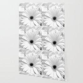 Winter White Gerbera Daisy A199 Wallpaper
