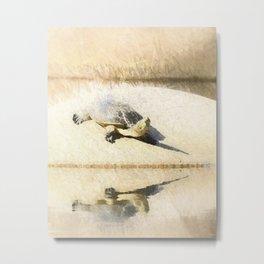 Hilaire's toadhead turtle Metal Print