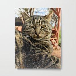 Big Boi (Lanai Cat Sanctuary) Metal Print