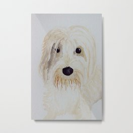 Gina the PBGV Metal Print