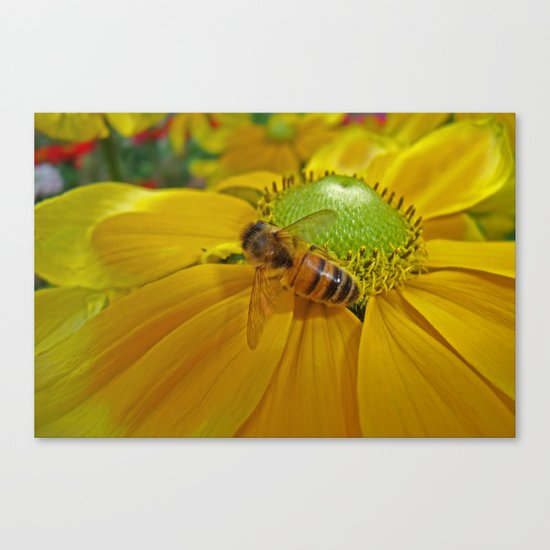 Honey Bee and Dahlia Canvas Print