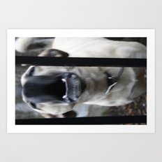 Barking Art Print