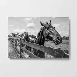 Horses in the Pasture Metal Print