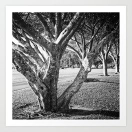 Row of trees in black and white Art Print
