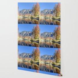 Autumn Aspens Wallpaper