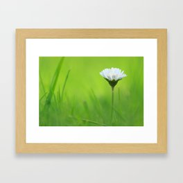 Massive Daisy Framed Art Print