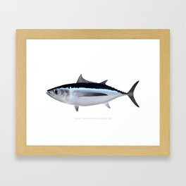 Albacore Tuna Framed Art Print