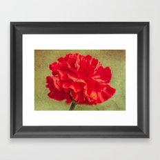 Red Carnation. Framed Art Print