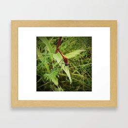 Red Meadowhawk Dragonfly Framed Art Print