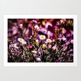 Daisy Fantasy - In the Wild Art Print