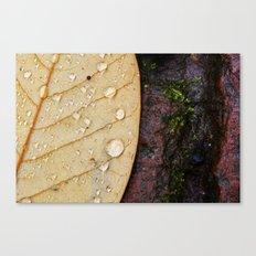 November Rain. Canvas Print