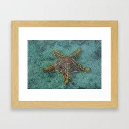 Starfish in the Lagoon Framed Art Print