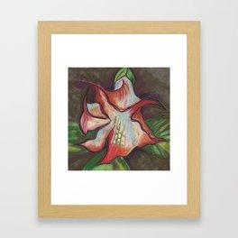 Brugmansia Framed Art Print
