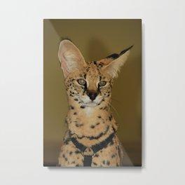 Serval Metal Print