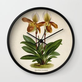 Cypripedium crossianum old plate Wall Clock