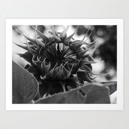 monstrous sunflower Art Print