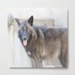 Handsome and his pink tongue Metal Print