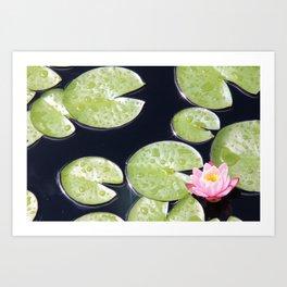 Lily Pads of Joy Art Print
