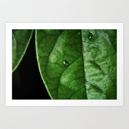 Green With Leaf Art Print