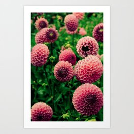 Let Yourself Bloom - Modern Botanical Photograph Art Print