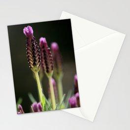 lavendula - IV Stationery Cards
