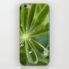 Lupin after rain 5111 iPhone & iPod Skin