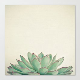 Echeveria Canvas Print