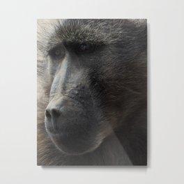 Closeup Babboon Metal Print