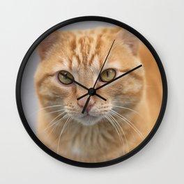 Ginger Cat Wall Clock