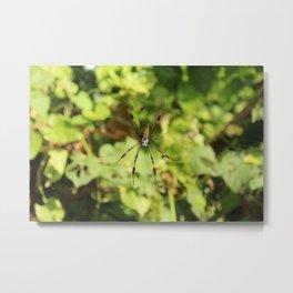 Jamaican Mountain Spider Metal Print
