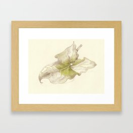 Aram leaf Framed Art Print