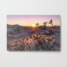 Joshua Tree National Park Cholla Cactus Sunset Sun flare (warm tones) Metal Print