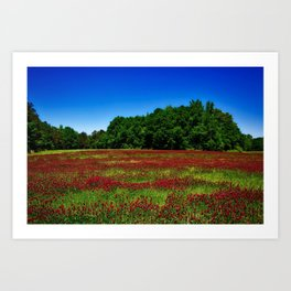 Picturesque crimson clover amid hidden meadow in the forest Art Print