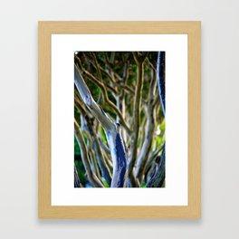 Crepe Myrtle Tree Branches Framed Art Print