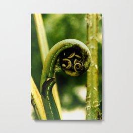 Fiddlehead Fern photo Metal Print