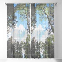 Watercolor Tree, Under, Aspen 06, Lost Creek Wilderness, Colorado Sheer Curtain