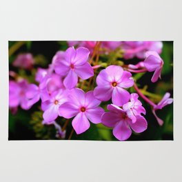 Pink Spring Rug