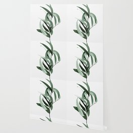 Eucalyptus - Australian gum tree Wallpaper