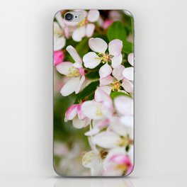 Pretty white and pink blossom in spring iPhone Skin