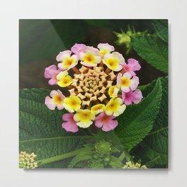 Fresh Lantana Flower Against Leaf Background Metal Print
