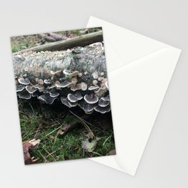 Fairies. Rushmere Country Park, Bedfordshire Stationery Cards