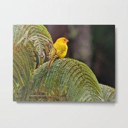 Saffron Finch Metal Print