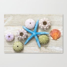 Blue Starfish and Friends Canvas Print