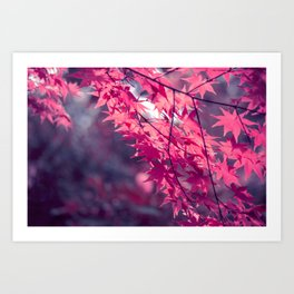 Autumn foliage in backlight Art Print
